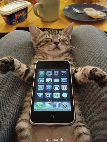 [iPhone]テキスト入力するとき勝手に修正される件
